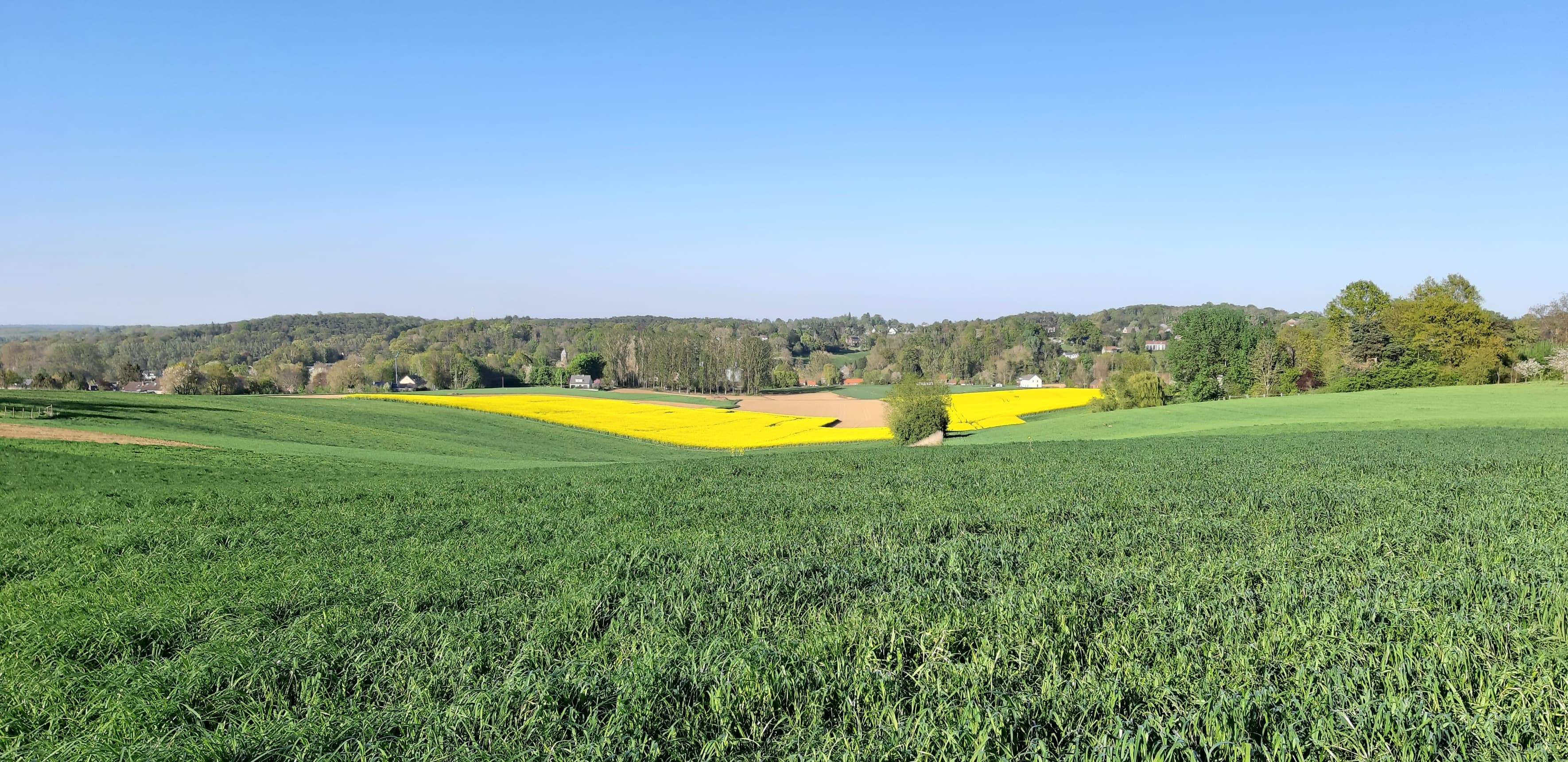 paysage-campagne